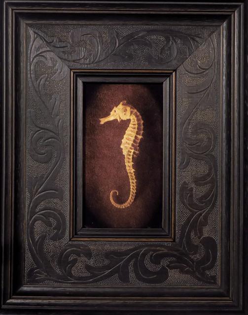 Kate Breakey, 'Seahorse I', Etherton Gallery