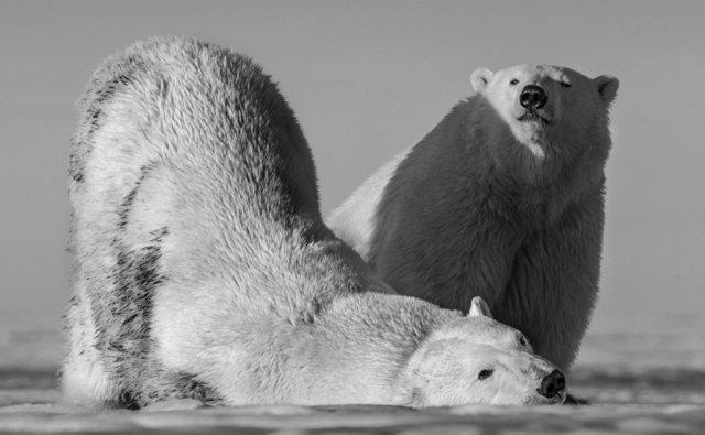David Yarrow, 'Monday Morning Alaska', Photography, Kunsthuis Amsterdam