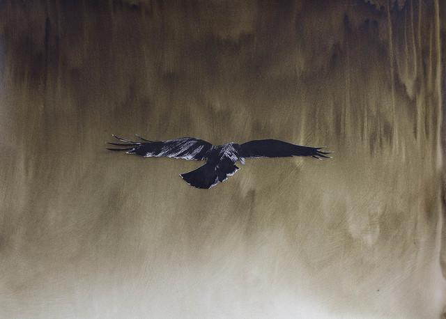 , 'Raven ,' 2017, Peter Robertson Gallery