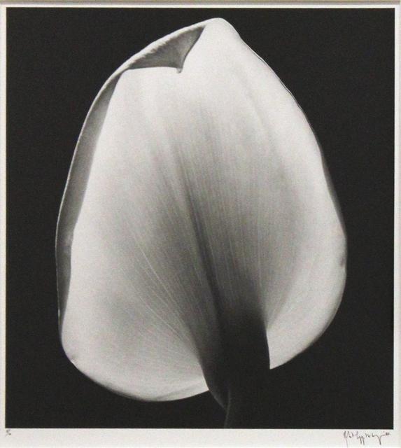 , 'Calla Lily,' 1984, Robert Miller Gallery