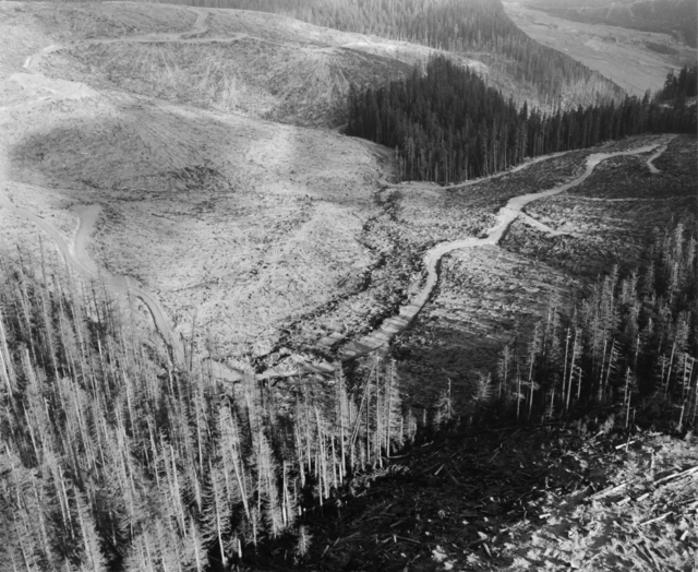 , 'Aerial view: standing dead and living trees, logging traces- edge of blast impact area approx. 14 miles W. of Mt. St. Helens, Wash.,,' 1981, Etherton Gallery