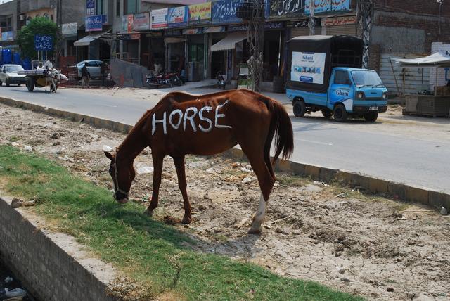 , 'Horse,' 2013, Sanat Initiative