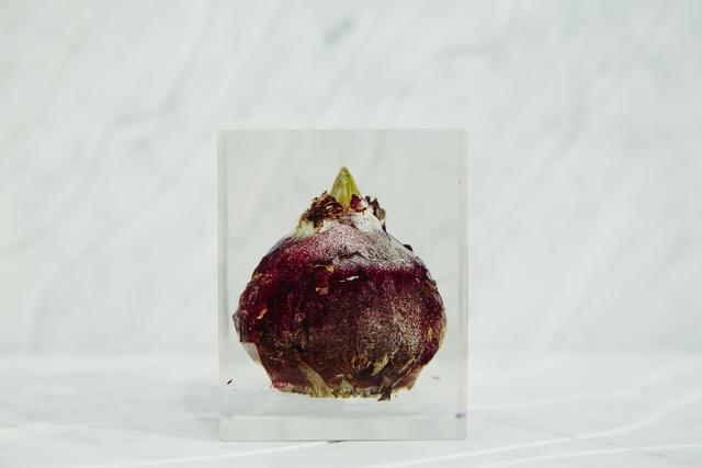 , '[acrylic bulb #10],' 2016, Chamber