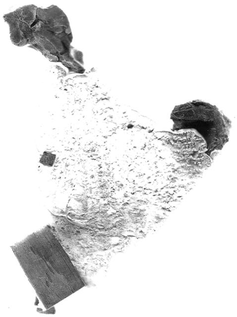 , 'Escaneo 11,' 2017, Terreno Baldío