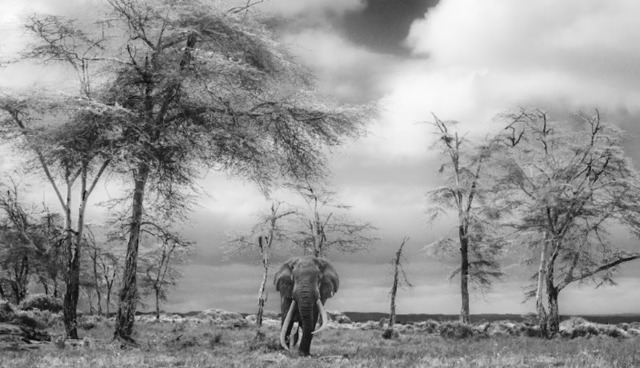 David Yarrow, 'The Fairytale', 2017, Isabella Garrucho Fine Art