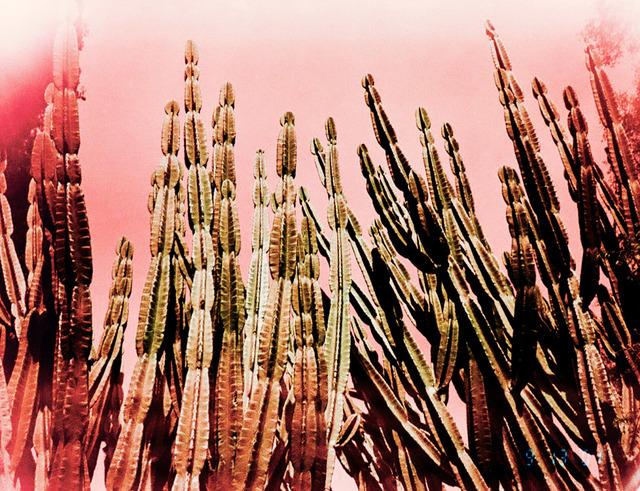 , 'Pink Cactus,' 2016, LAMB Arts