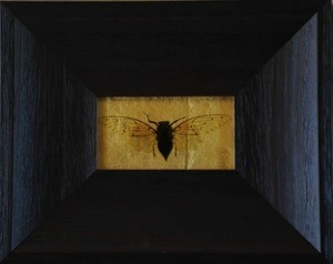 , 'Cicada,' , Catherine Couturier Gallery