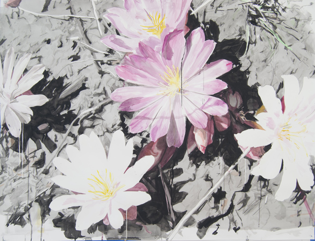 , 'Pink and White Lewisias with Silhouettes,' 2016, Elizabeth Houston Gallery