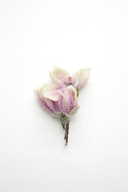 , 'Sans titre (petit Magnolia),' 2019, Chez Mohamed
