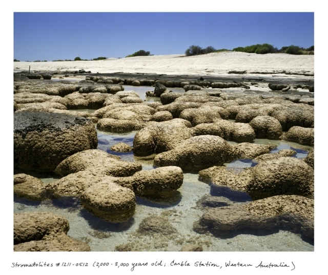, 'Stromatolites #1211-0512 (2000 - 300 years old, Carble Sttion, Western Australia)		,' , Sapar Contemporary