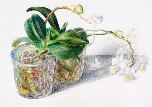 , 'Zwei Orchideen,' 2018, Galerie Kleindienst
