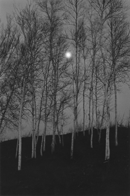 , 'Birch Trees by Moonlight, The Adirondacks, NY,' 1972, Gallery 270