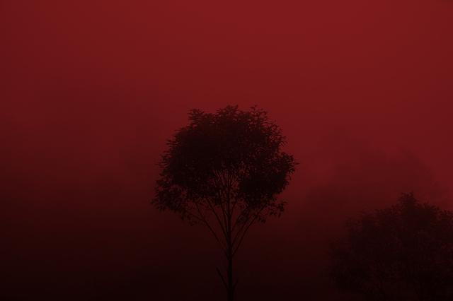 , 'Árbol Rojo,' 2016, Almanaque