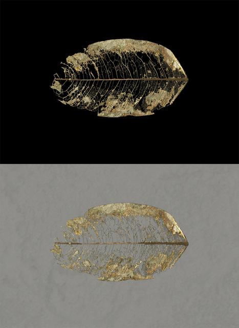 , 'Volcanic Leaf Suspended ,' 2014, David Richard Gallery