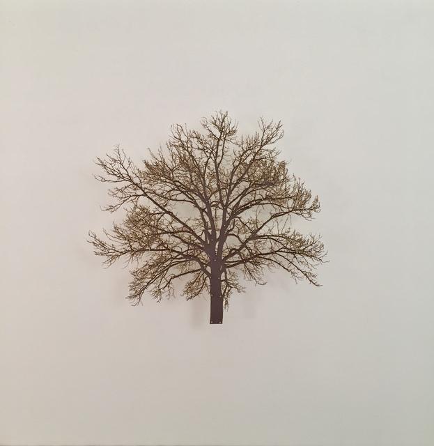 , 'Oak Tree 6,' 2015, Serena Morton