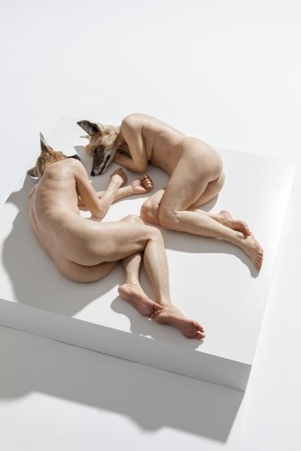 , 'Unsettled Dogs,' 2012, Sullivan+Strumpf