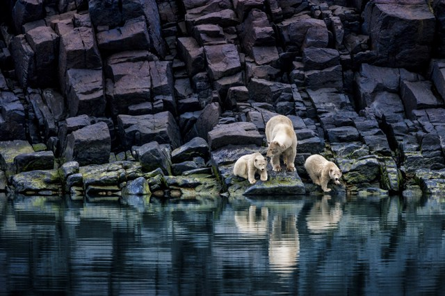 , 'The Long Summer ,' , Paul Nicklen Gallery