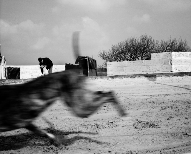 , 'Greyhound race, County Durham,' 2002, The Photographers' Gallery