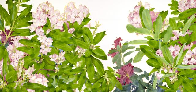 Gary Bukovnik, 'Rhododendron', 2019, Jody Klotz Fine Art