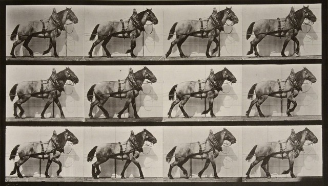 , 'Animal Locomotion: Plate 567 (Horse Walking),' 1887, Huxley-Parlour
