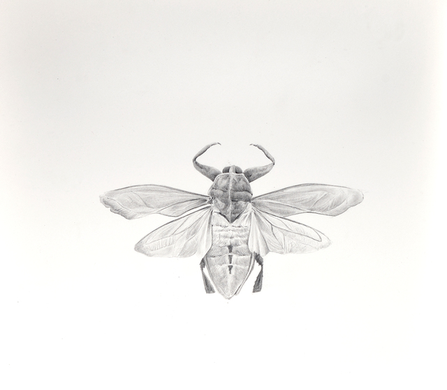 , 'Bichos,' 2018, Galerie C.O.A