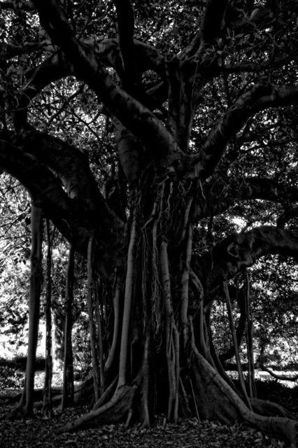 , 'Black Tree,' 2015, Galerie Prints