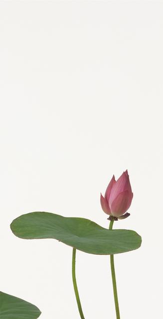 Takashi Tomo-oka, 'Lotus 2', 2010, Ippodo Gallery