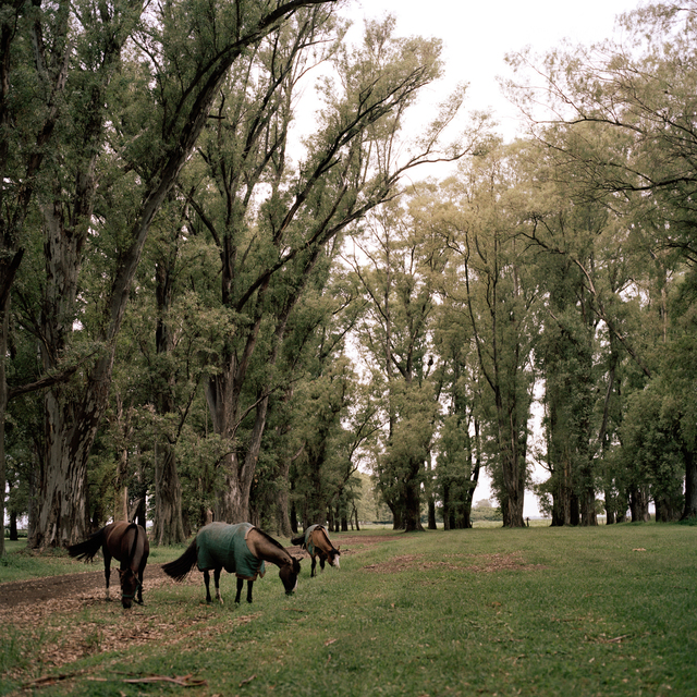 , 'Horses at El Mediodia Farm,' 2014-2016, Francesca Maffeo Gallery