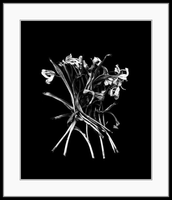 , 'Flowers #11 (Sinking),' 1988, The Art of Wild Gallery