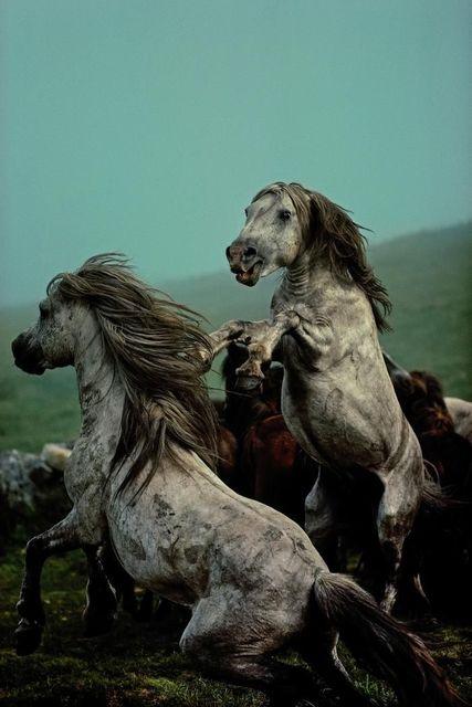 , 'LOT #23 | Wild horse roundup,' 1977, ILEX Gallery