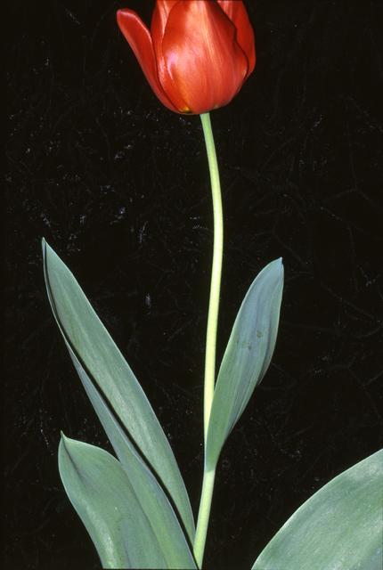 , 'Identité, Melun 10 avril 1990,' 2001, Galerie Christophe Gaillard