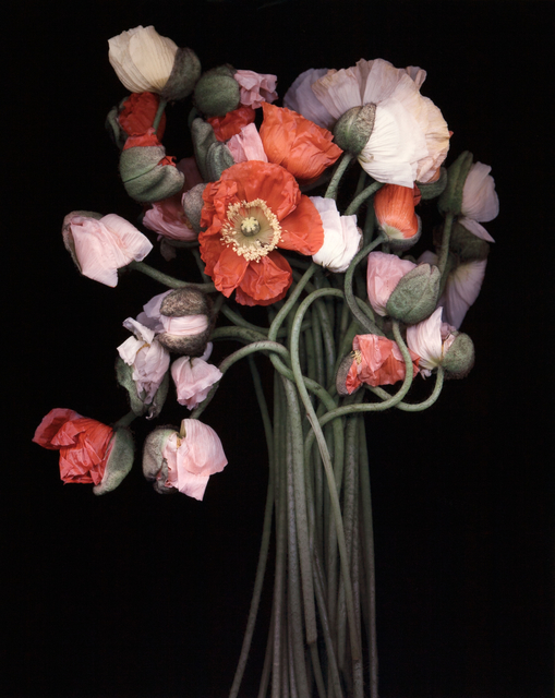 , 'Poppy Bouquet,' , Dowling Walsh