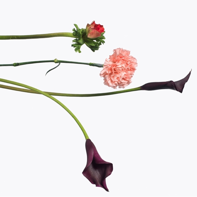 , '1 Red Anemone, 1 Pink Carnation, 1 Purple Calla Lily, 2013,' 2013, Gagosian