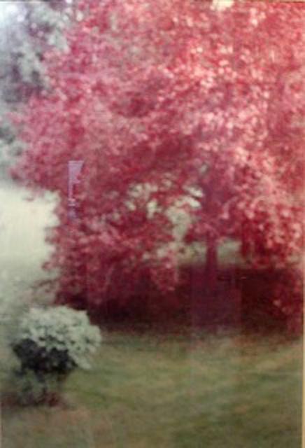 Seton Smith, 'Red Tree', Winston Wächter Fine Art