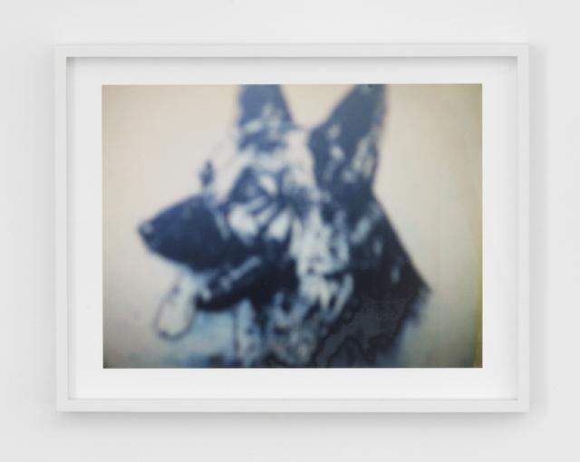 , 'Attenti al Cane (Cyan Dog),' 2007, Magenta Plains