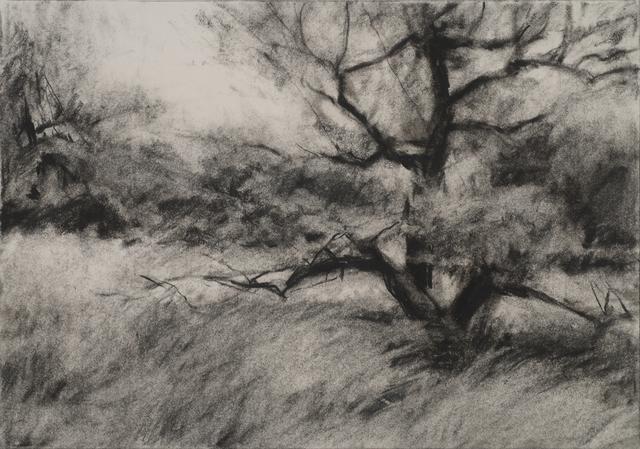 , 'Orchard #4,' , Dowling Walsh