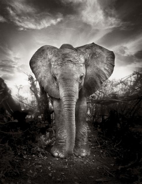 , 'Kibo,' Kenya 2009, Immagis Fine Art Photography