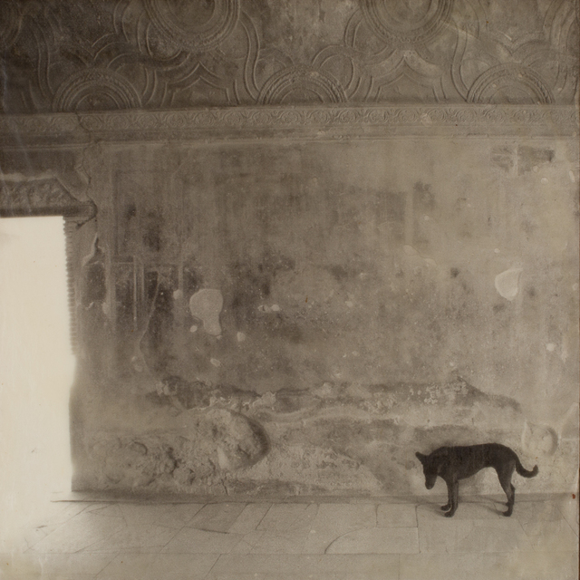 , 'Pompeii, Stray Dog, 100 Memories,' 2015, G. Gibson Gallery