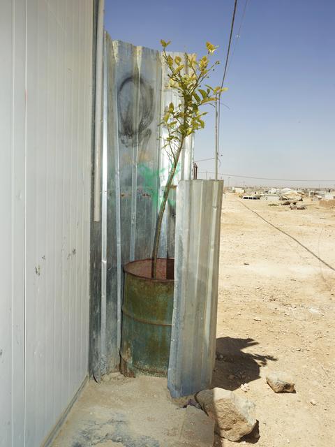 , 'Lime Tree, Zaatari, Jordan,' 2018, Galerie Bart