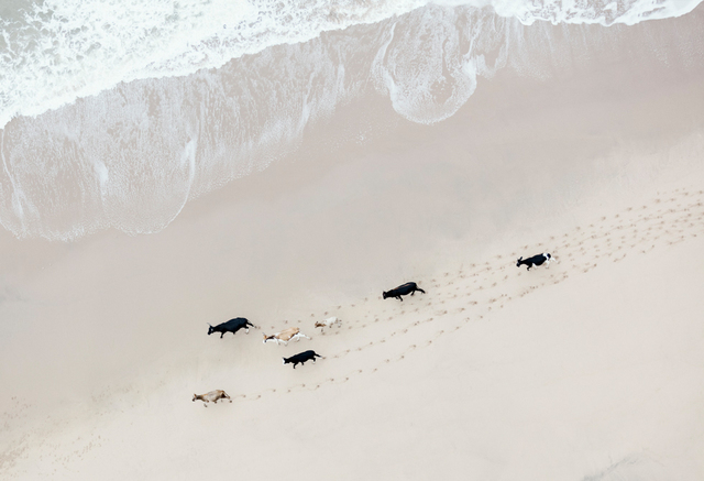 , 'Wild Coast Herd,' 2015, ClampArt