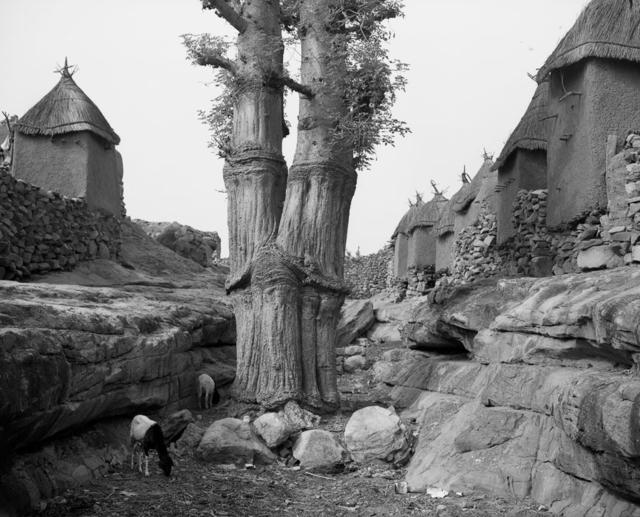 Ian van Coller, 'Village Baobab', 1998, jdc Fine Art