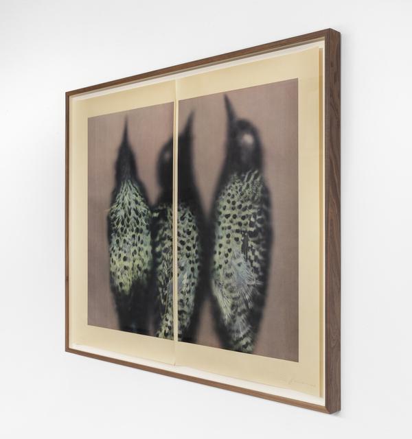 Ann Hamilton, 'Green-barred Woodpecker', 2021, Print, 5 color lithograph, Gemini G.E.L.