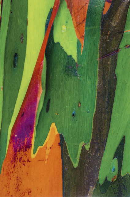 , 'Corteza Arcoiris XI,' 2015, Galería RGR