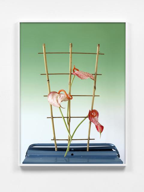 Annette Kelm, 'Lilly #1', 2018, Photography, Archival pigment print, KÖNIG GALERIE