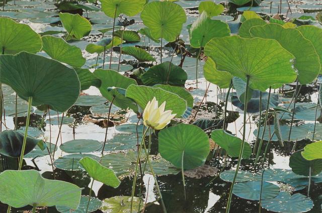 , 'Lotus Flower,' 2018, Duane Reed Gallery
