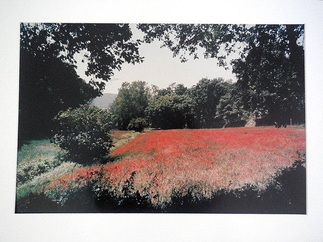 Joel Meyerowitz, 'Tuscany, Field of Poppies, 1996', 20th Century, Lions Gallery