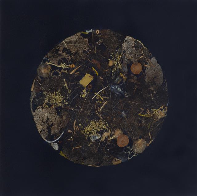 , 'Grasshopper Moon,' 2018, Lisa Sette Gallery