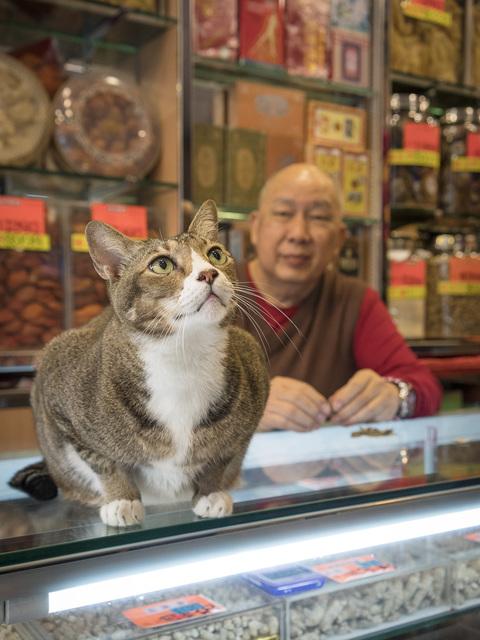 , 'HONG KONG SHOP CATS #20,' 2015, Blue Lotus Gallery