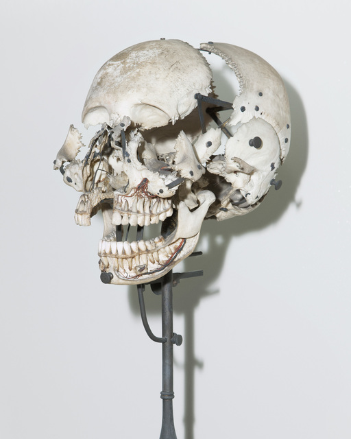 , 'Skull used for anatomical studies. Dom João VI Museum (French Mission series),' 2017, Zipper Galeria