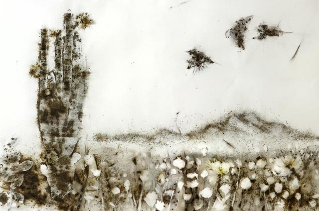 Cai Guo-Qiang, 'Sunshine and Solitude: Poppy Flowers', 2010, Fundación Proa